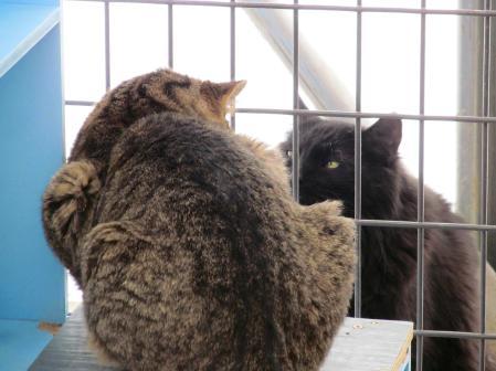 Cat Truce