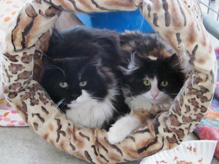 Princess Cats 005