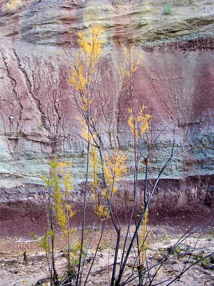 Ghost Ranch 016