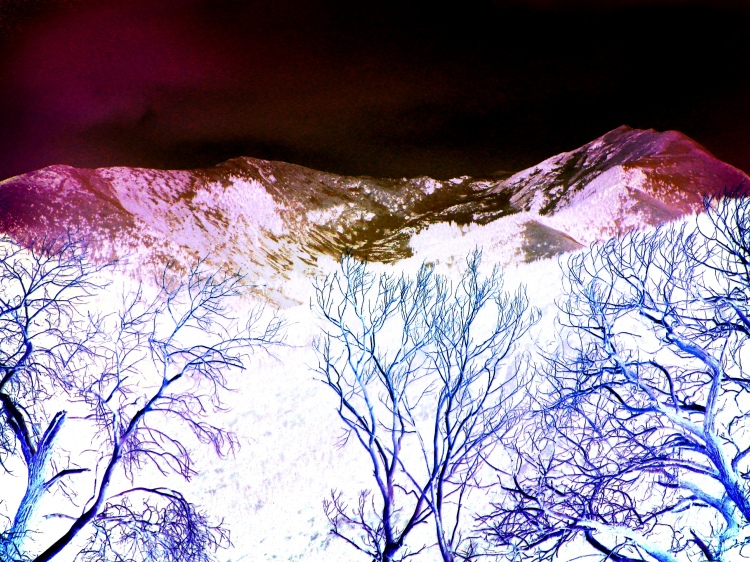 Trees and mountain 018