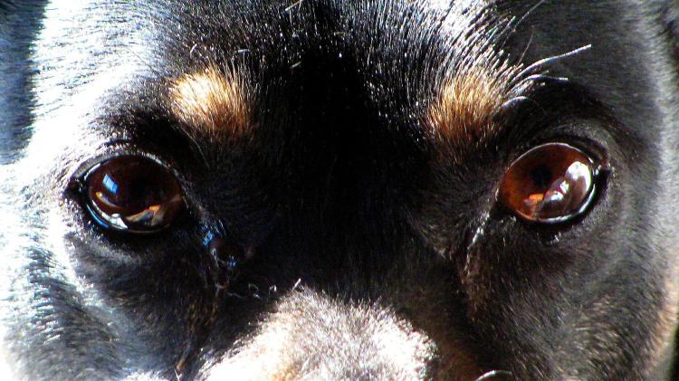 Yin Yang Terrier 018 (2)