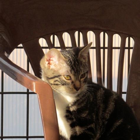 Stray Cat 020