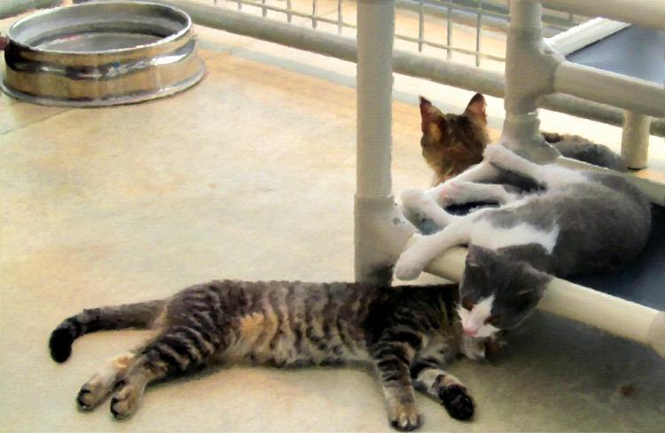 Kittens 023 oil