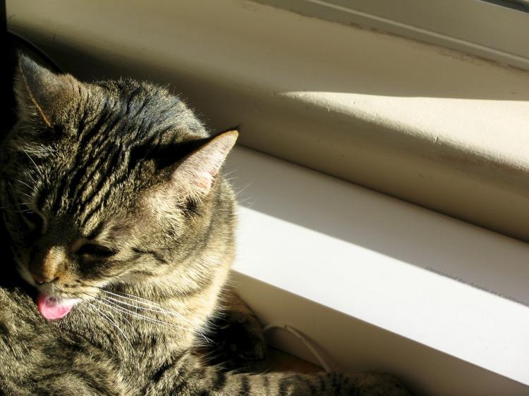 goofy cat 028