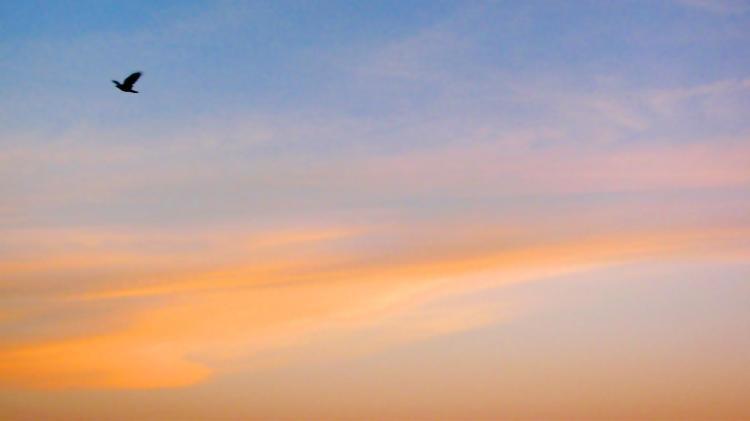 raven sunset 028
