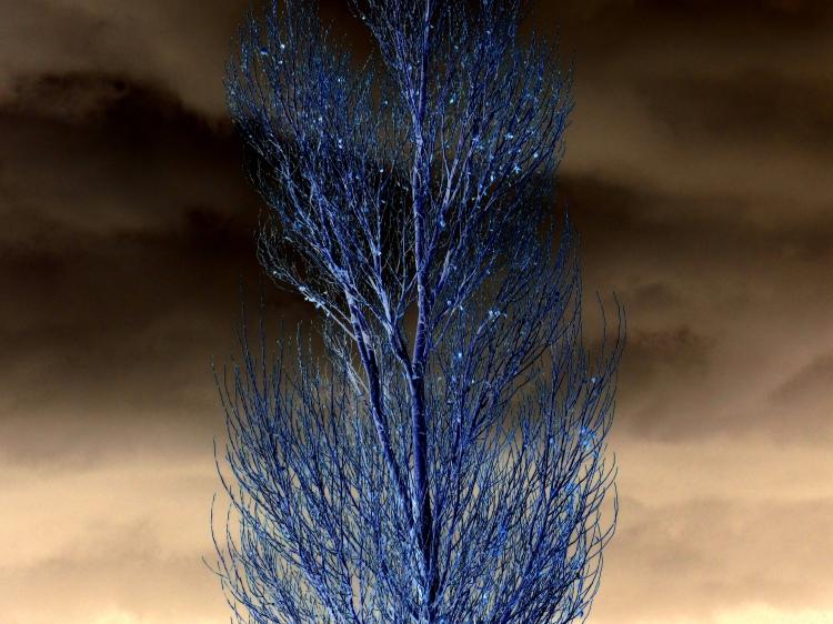storm tree 038.jpeg