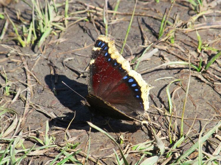 Butterfly 040.jpg