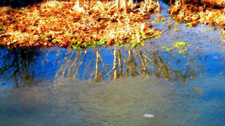 reflections 040.jpg
