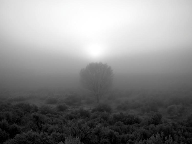 fog-sunrise-22 042.jpg