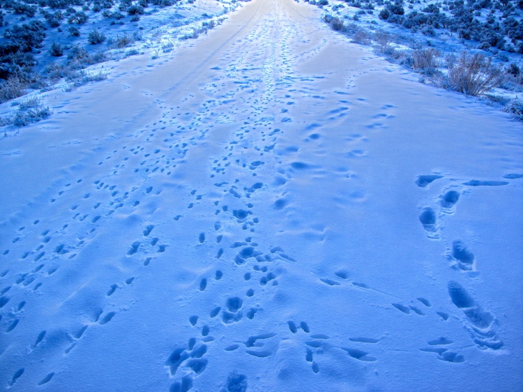 footprints 042.jpeg