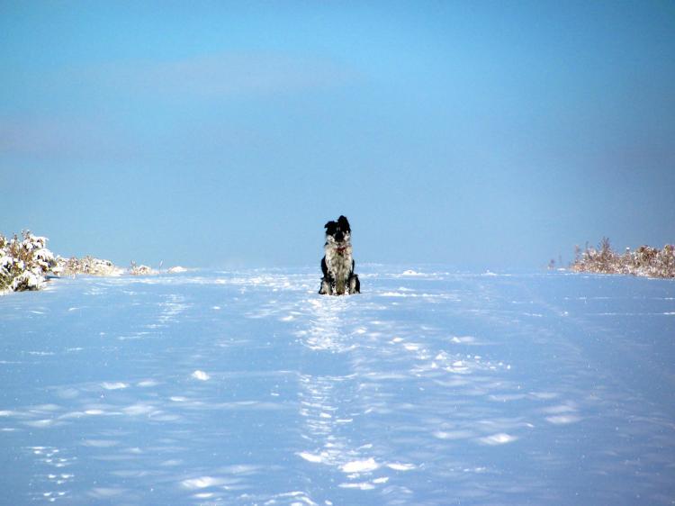 One Dog 040.jpg