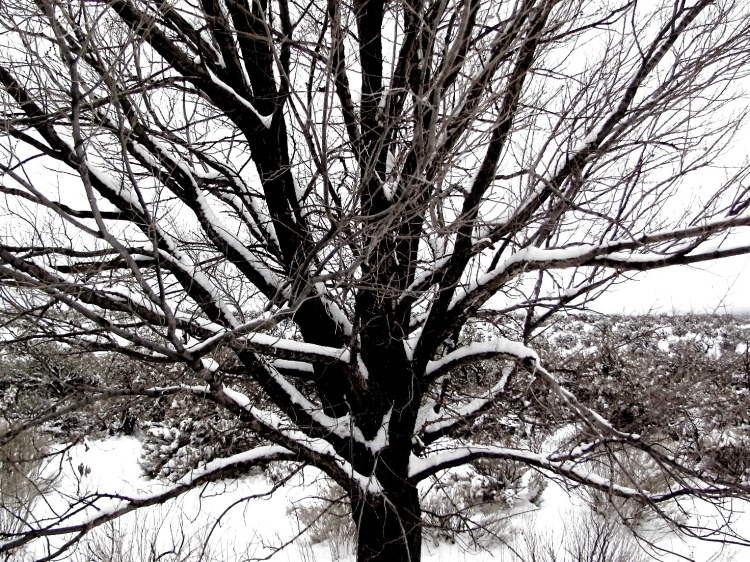 snow tree 041.jpeg