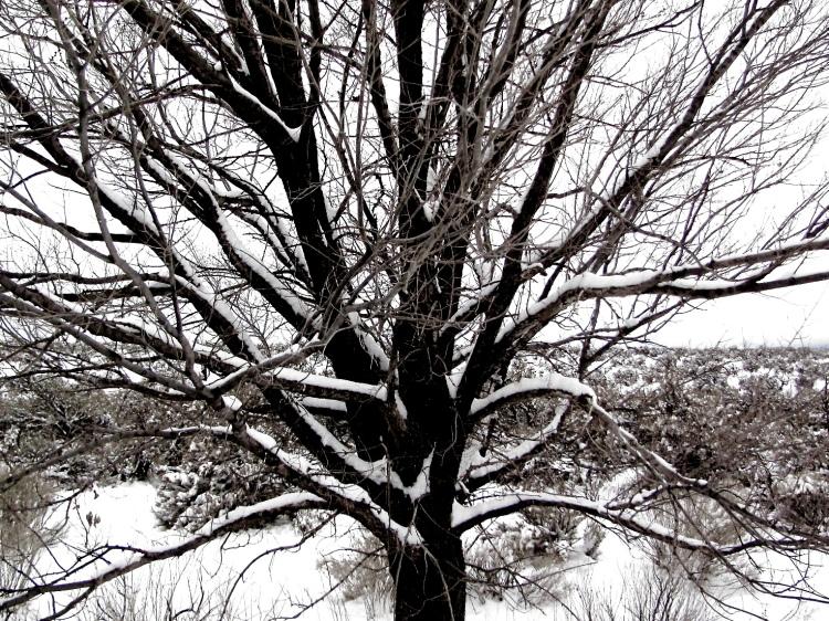 snow tree 041.jpeg