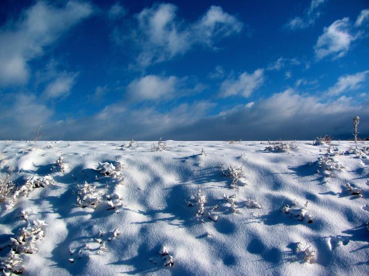 snow ridge 042.jpg