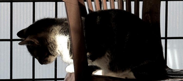 catlight 050.jpeg
