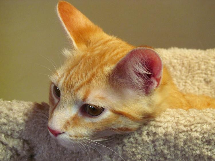 Ginger cat 055.jpg